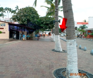 Taxi pickup happened here (see arrow) Puerto Vallarta Malecon.