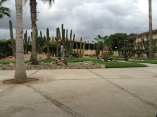 Fist time seeing cactus. hotel view and grounds.