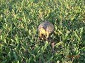 Turtle says hello