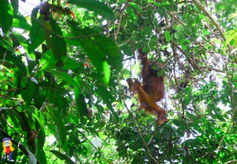 Orang gets lunch